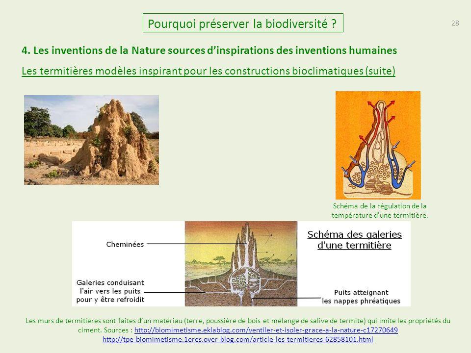 Schéma de la régulation de la température d une termitière.