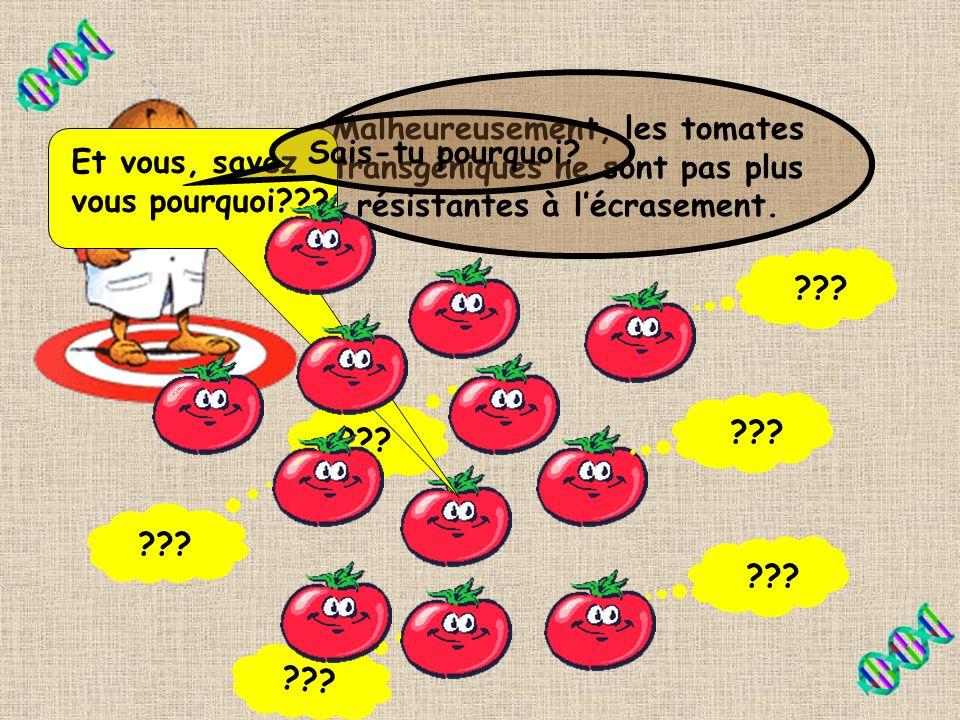 Malheureusement, les tomates transgéniques ne sont pas plus résistantes à l'écrasement.