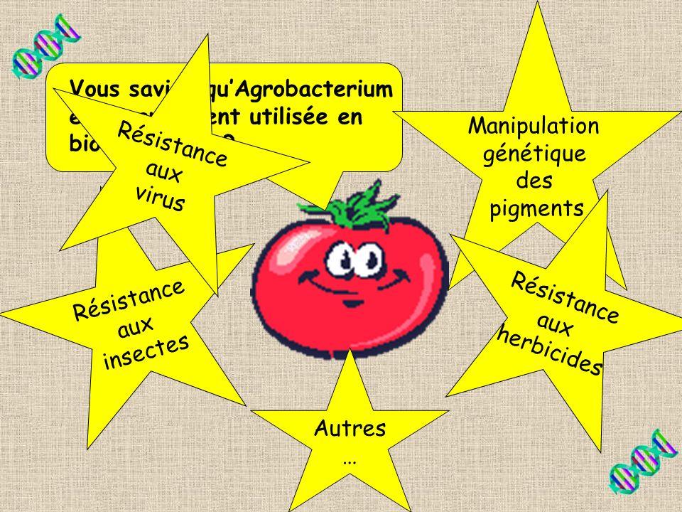 Manipulation génétique. des. pigments. Résistance. aux. virus. Vous saviez qu'Agrobacterium est grandement utilisée en biotechnologie