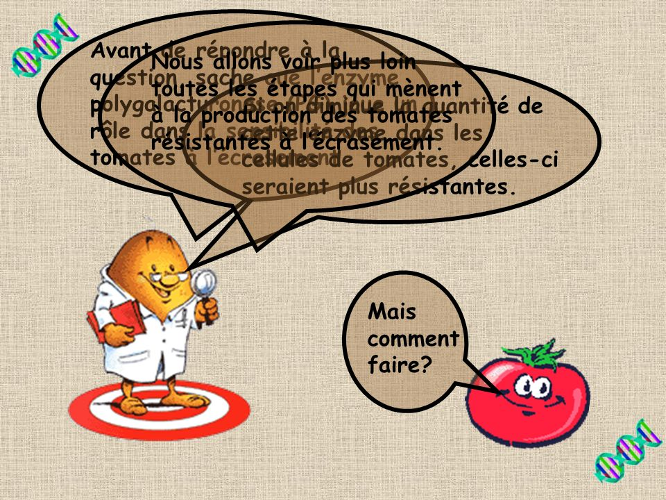 Avant de répondre à la question, sache que l'enzyme polygalacturonase (PG) joue un rôle dans la sensibilité des tomates à l'écrasement.