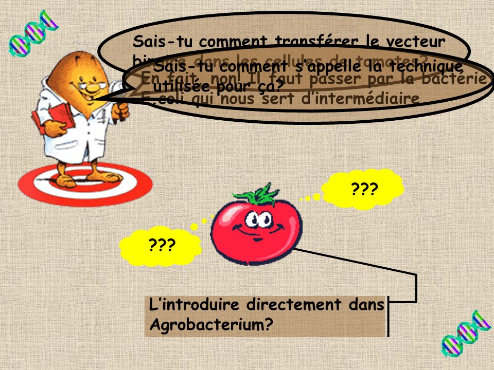 Sais-tu comment transférer le vecteur binaire dans les cellules de tomates