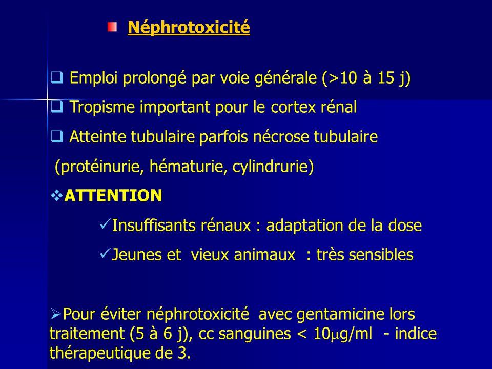 Néphrotoxicité Emploi prolongé par voie générale (>10 à 15 j) Tropisme important pour le cortex rénal.