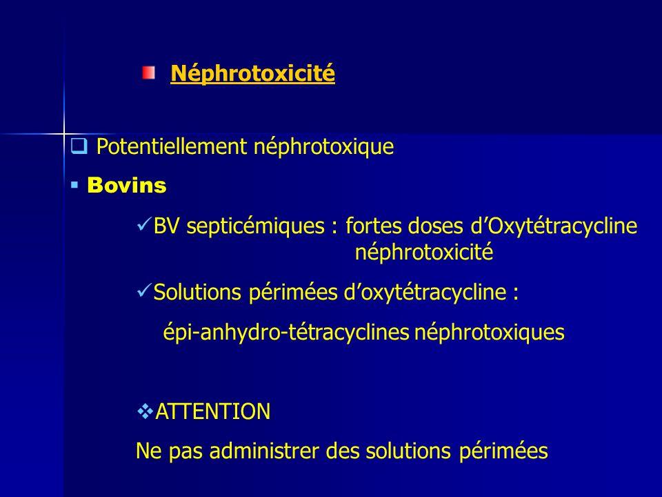 Néphrotoxicité Potentiellement néphrotoxique. Bovins. BV septicémiques : fortes doses d'Oxytétracycline néphrotoxicité.