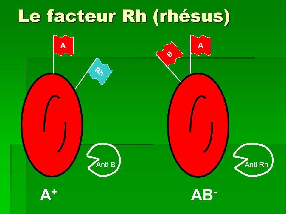 Le facteur Rh (rhésus) A A B Rh Anti B Anti Rh A+ AB-