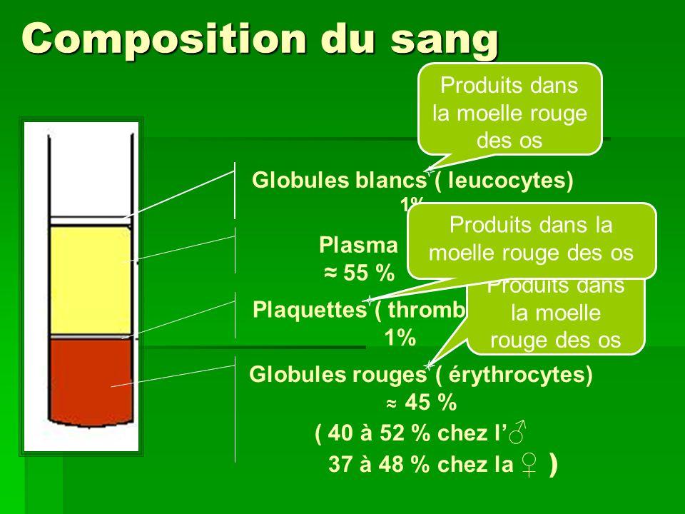Composition du sang Produits dans la moelle rouge des os