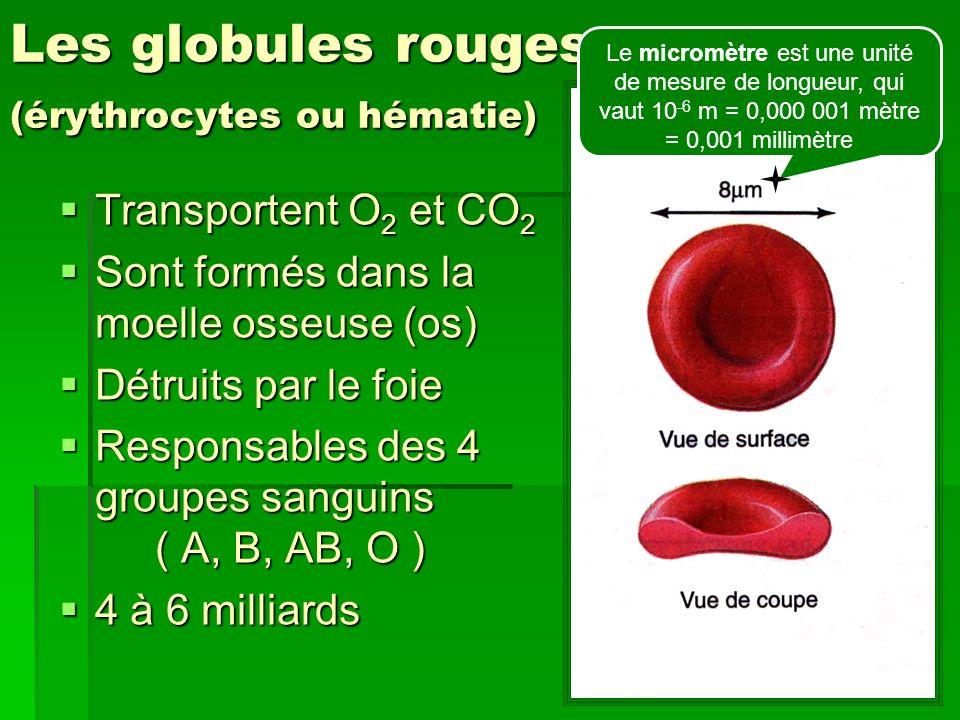 Les globules rouges (érythrocytes ou hématie)