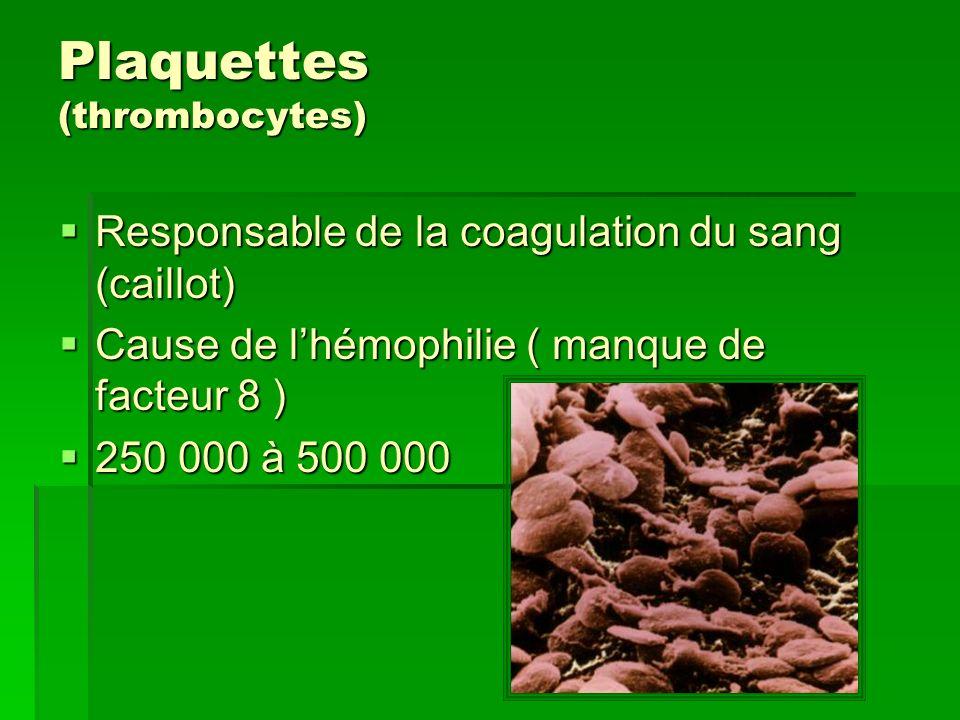 Plaquettes (thrombocytes)