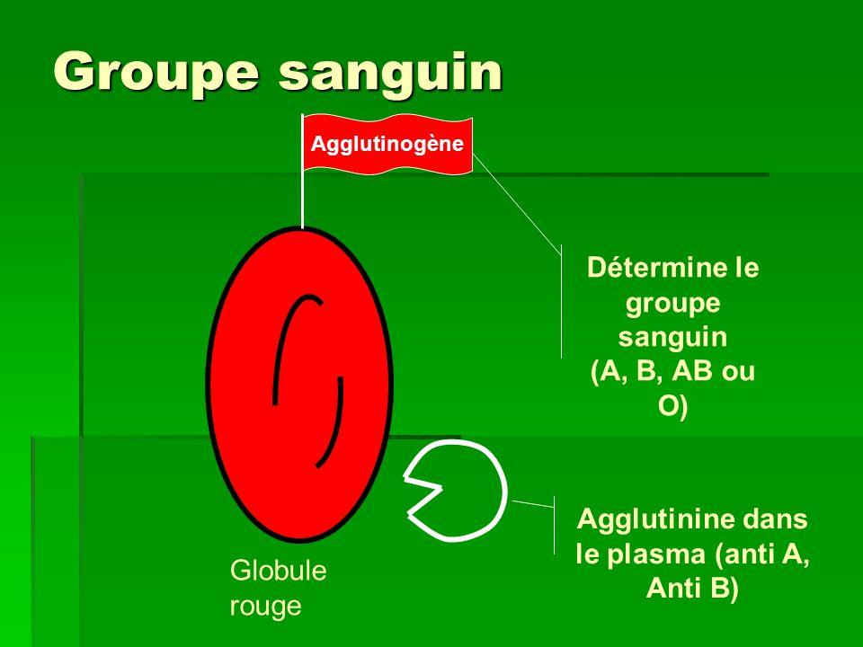 Groupe sanguin Détermine le groupe sanguin (A, B, AB ou O)