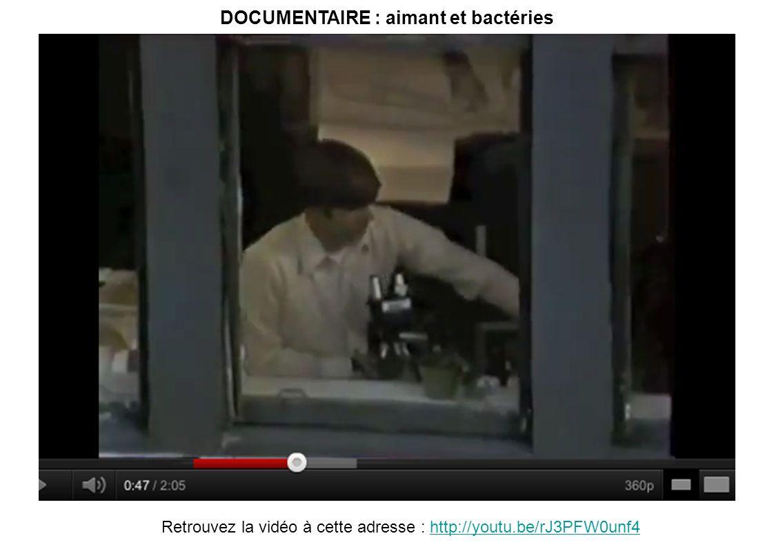 DOCUMENTAIRE : aimant et bactéries