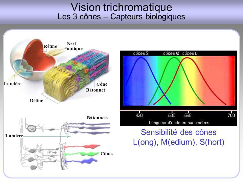 Vision trichromatique Les 3 cônes – Capteurs biologiques