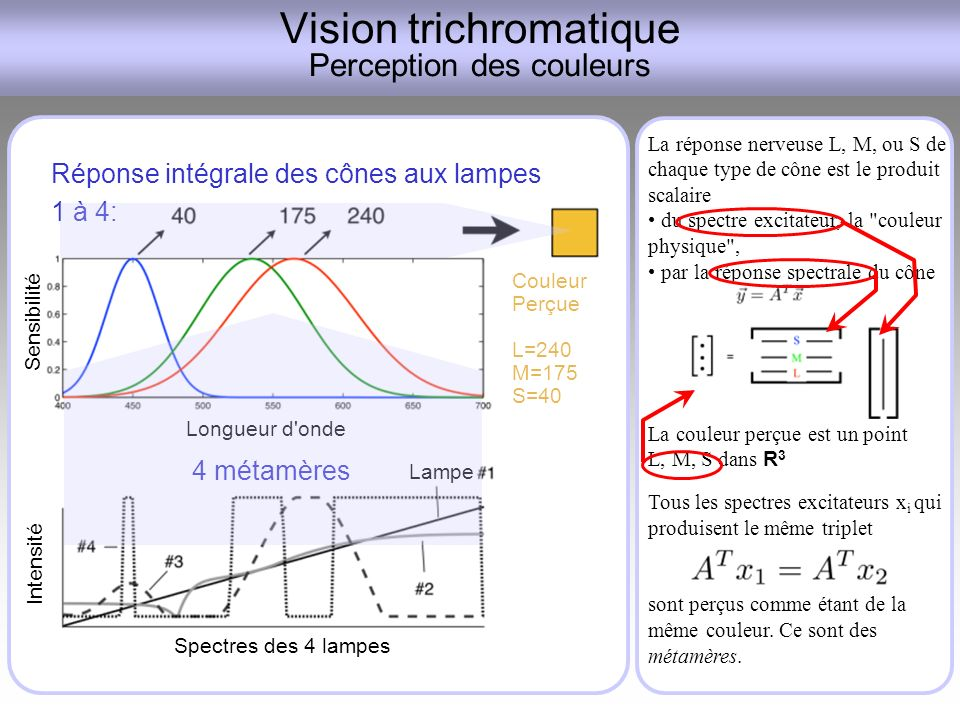 Vision trichromatique Perception des couleurs