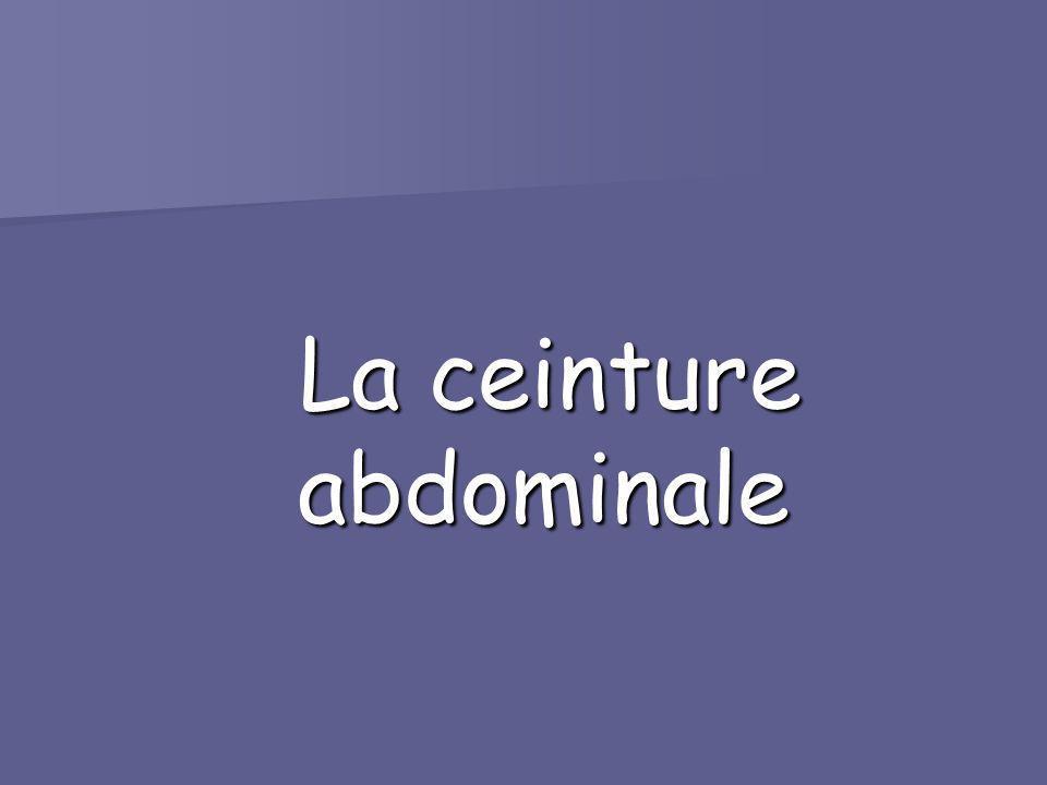 La ceinture abdominale