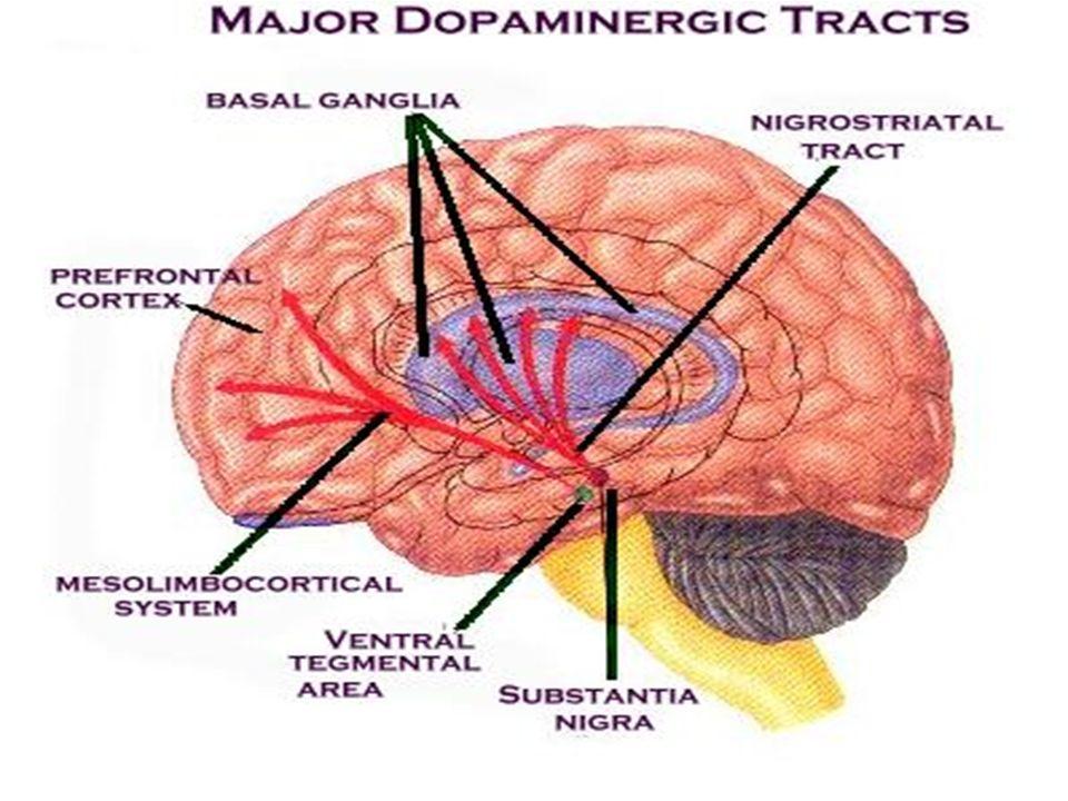 Modèle dopaminergique de la schizophrénie: modèle probablement simpliste mais qui permet d'appréhender le fonctionnement des neuroleptiques