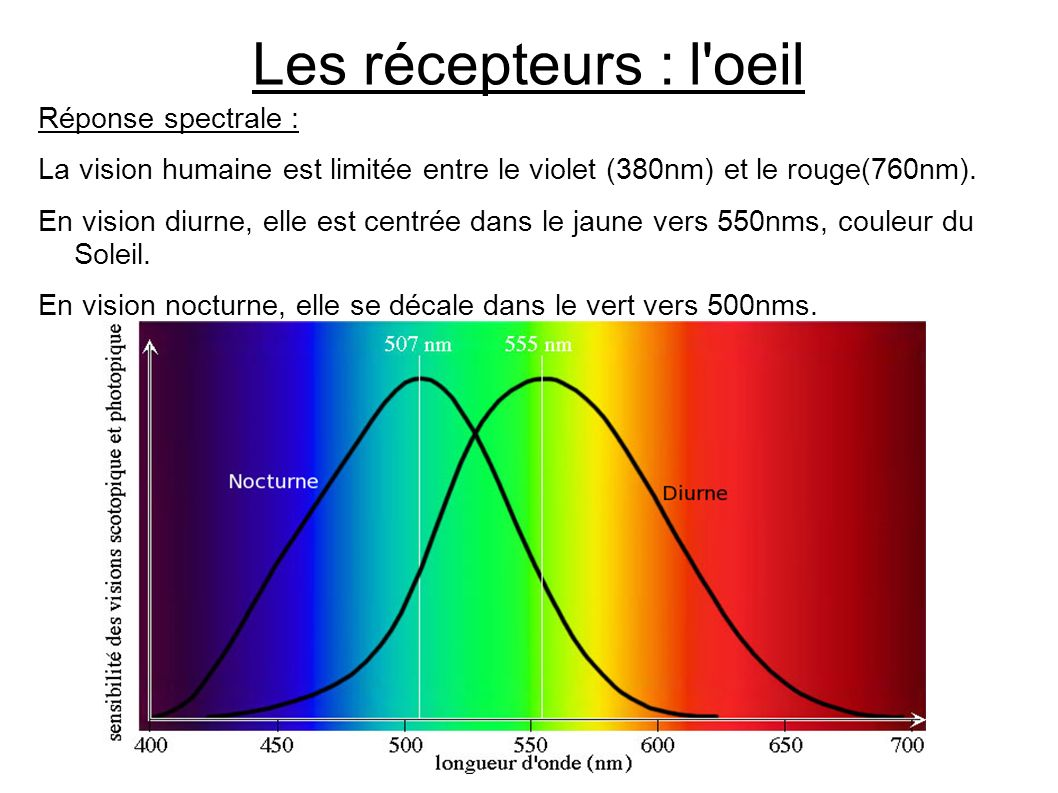 Les récepteurs : l oeil Réponse spectrale :