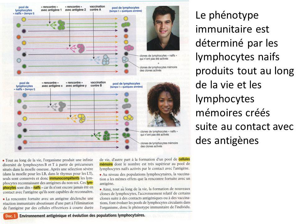 Le phénotype immunitaire est déterminé par les lymphocytes naifs produits tout au long de la vie et les lymphocytes mémoires créés suite au contact avec des antigènes