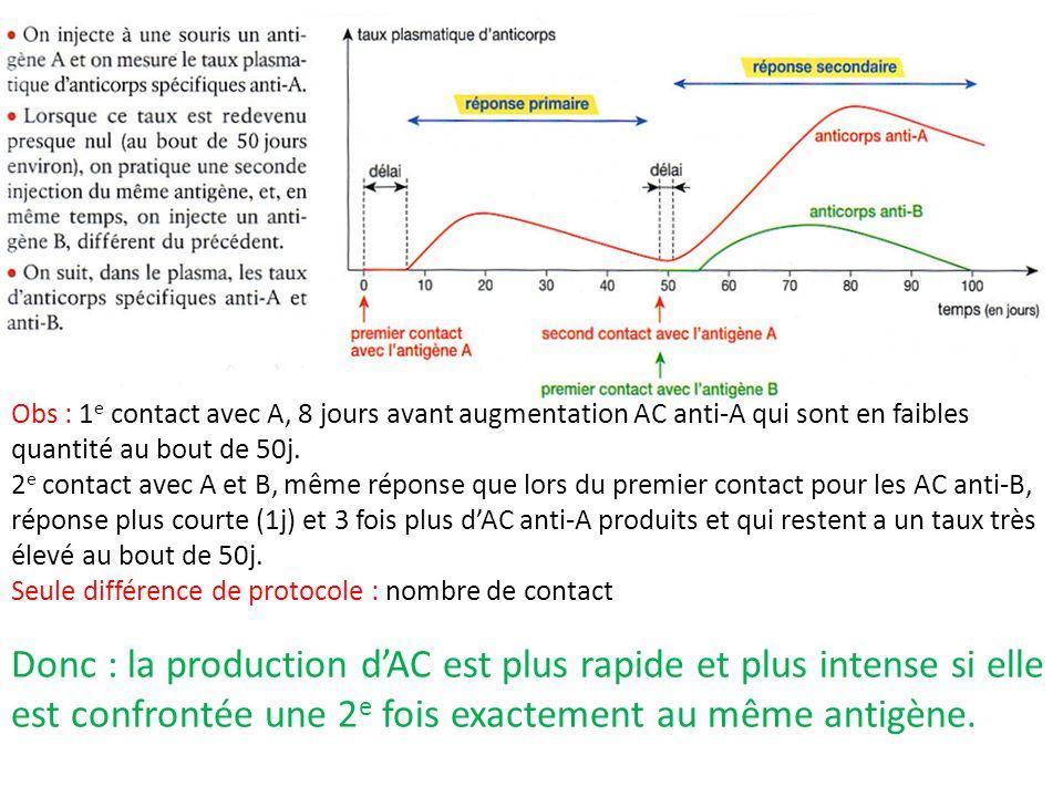 Obs : 1e contact avec A, 8 jours avant augmentation AC anti-A qui sont en faibles quantité au bout de 50j.