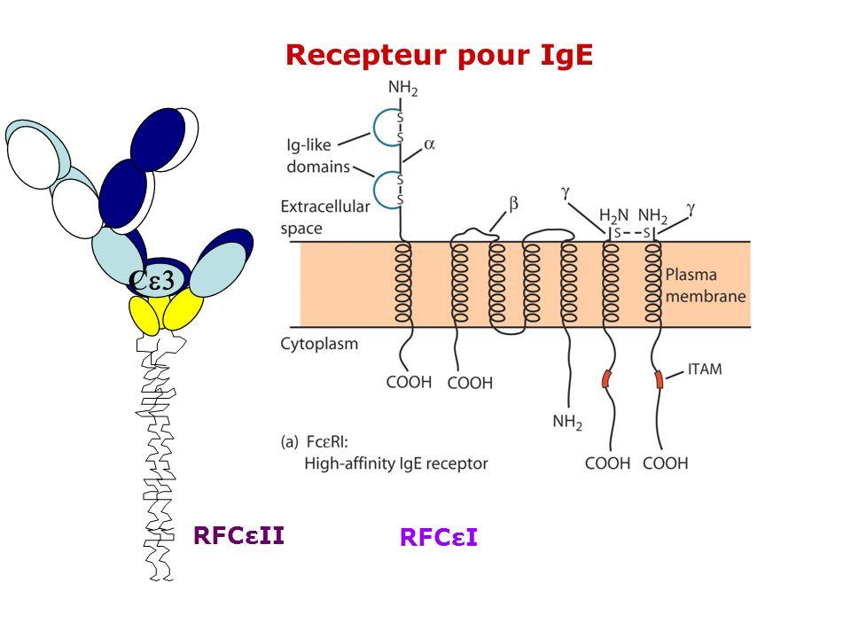 Recepteur pour IgE Ce3 RFCεII RFCεI