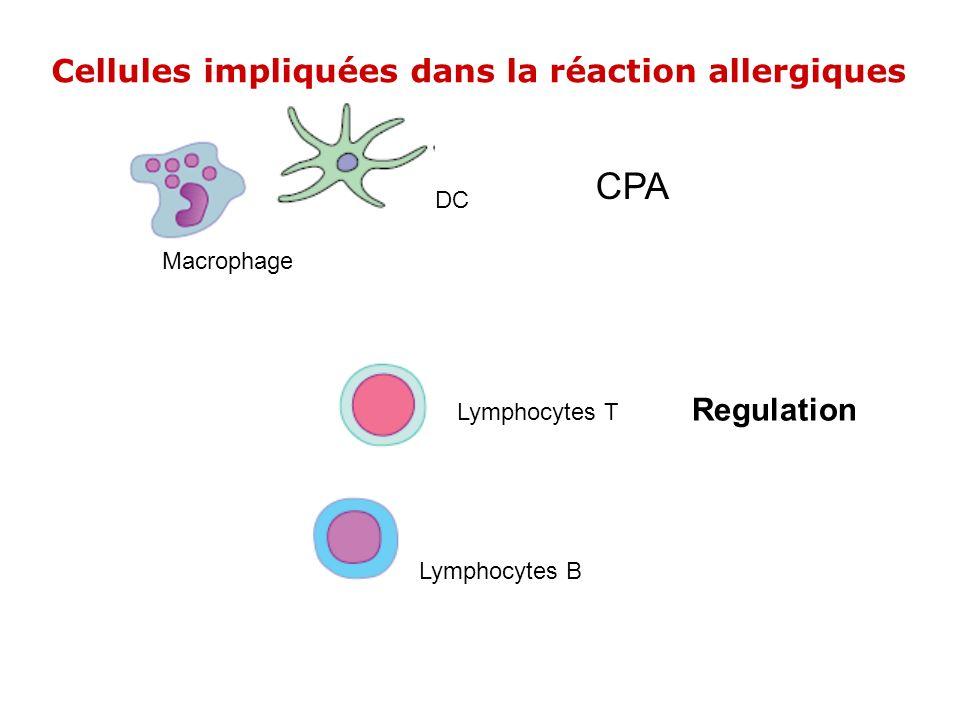CPA Cellules impliquées dans la réaction allergiques Regulation DC