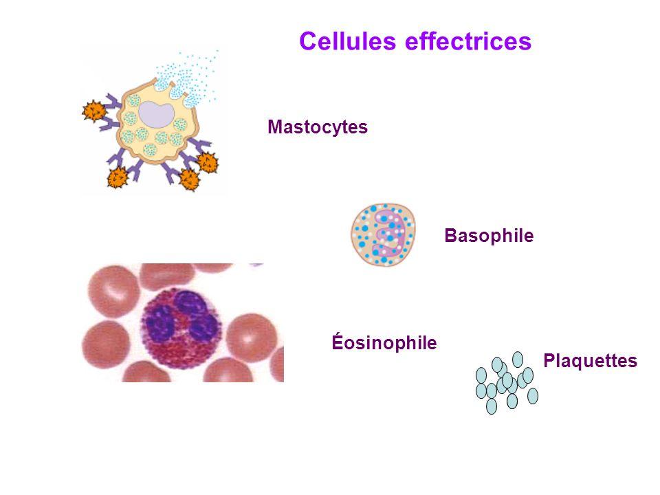Cellules effectrices Mastocytes Basophile Éosinophile Plaquettes