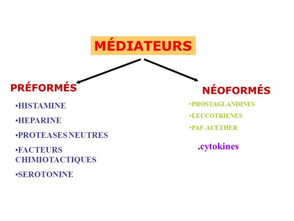 MÉDIATEURS PRÉFORMÉS NÉOFORMÉS .cytokines HISTAMINE HEPARINE