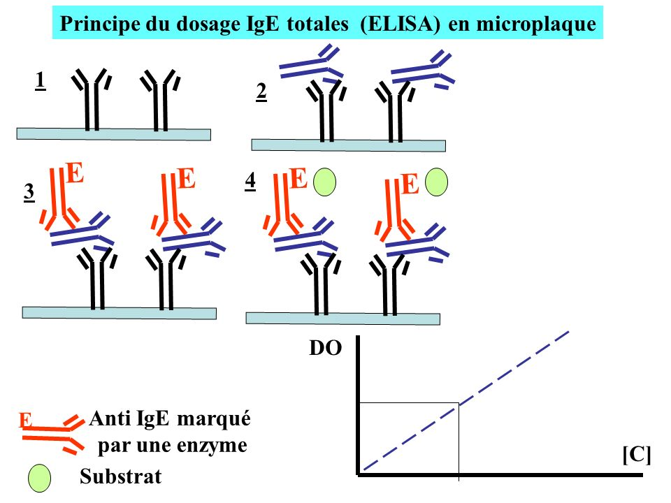 Principe du dosage IgE totales (ELISA) en microplaque