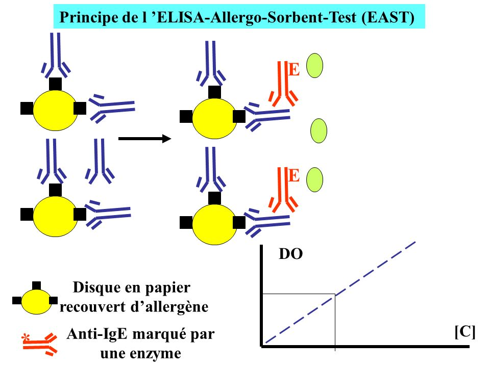 Principe de l 'ELISA-Allergo-Sorbent-Test (EAST) recouvert d'allergène