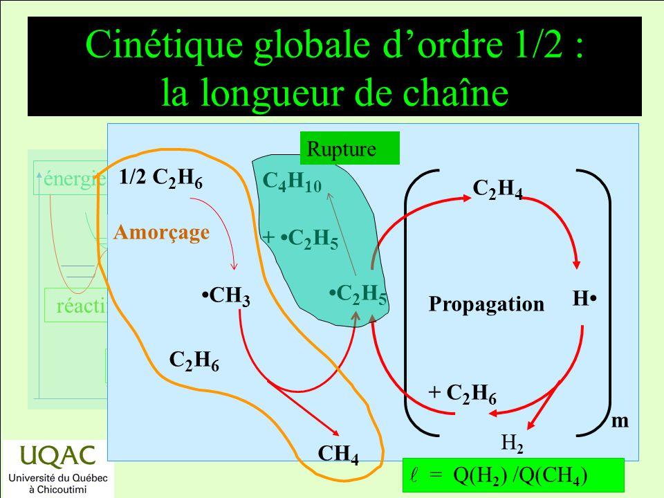 Cinétique globale d'ordre 1/2 : la longueur de chaîne