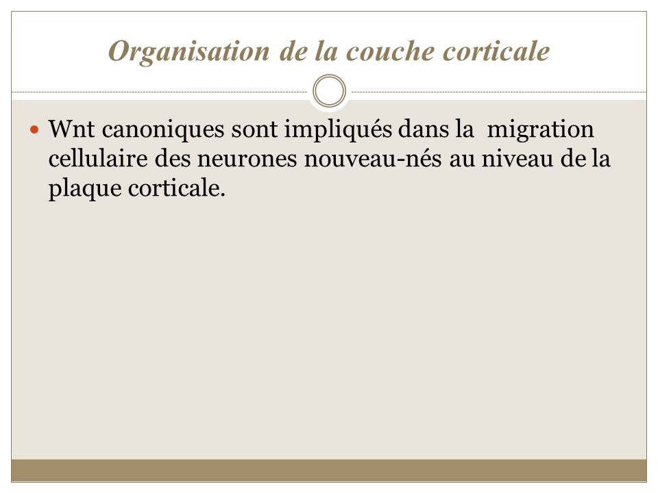 Organisation de la couche corticale