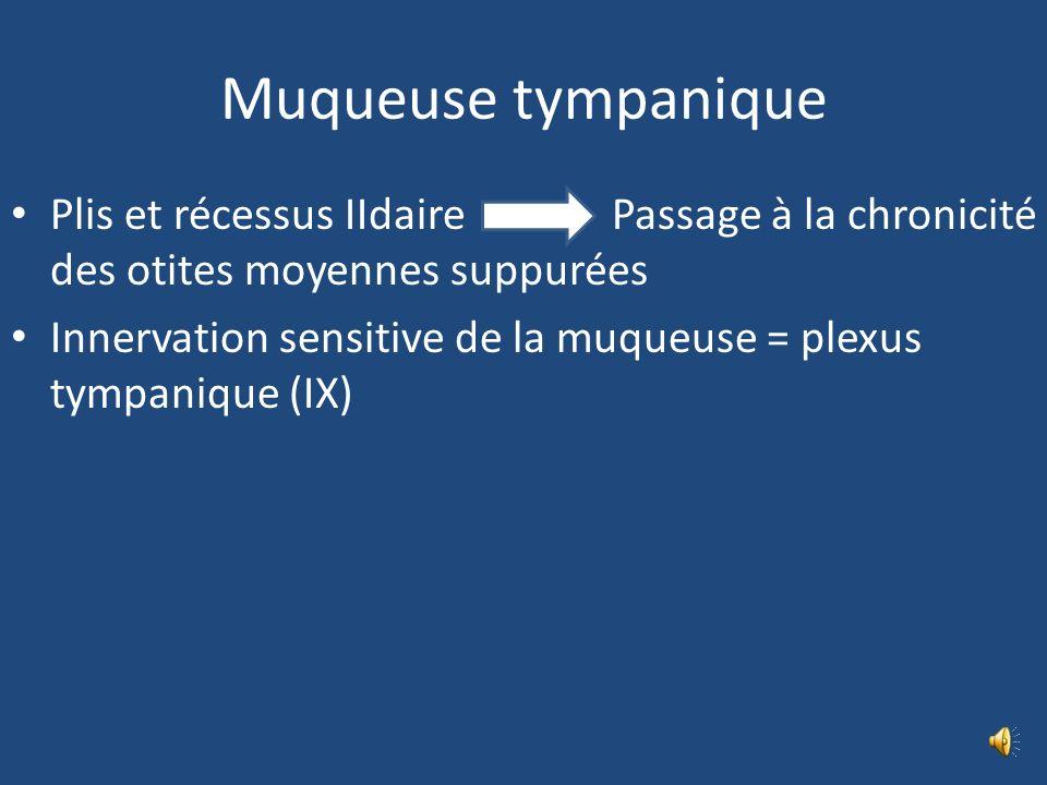 Muqueuse tympanique Plis et récessus IIdaire Passage à la chronicité des otites moyennes suppurées.