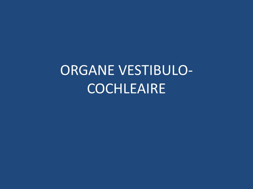 ORGANE VESTIBULO-COCHLEAIRE