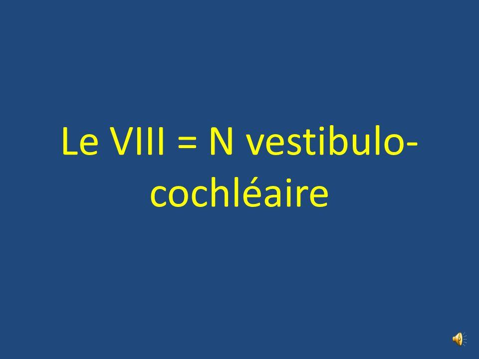 Le VIII = N vestibulo-cochléaire