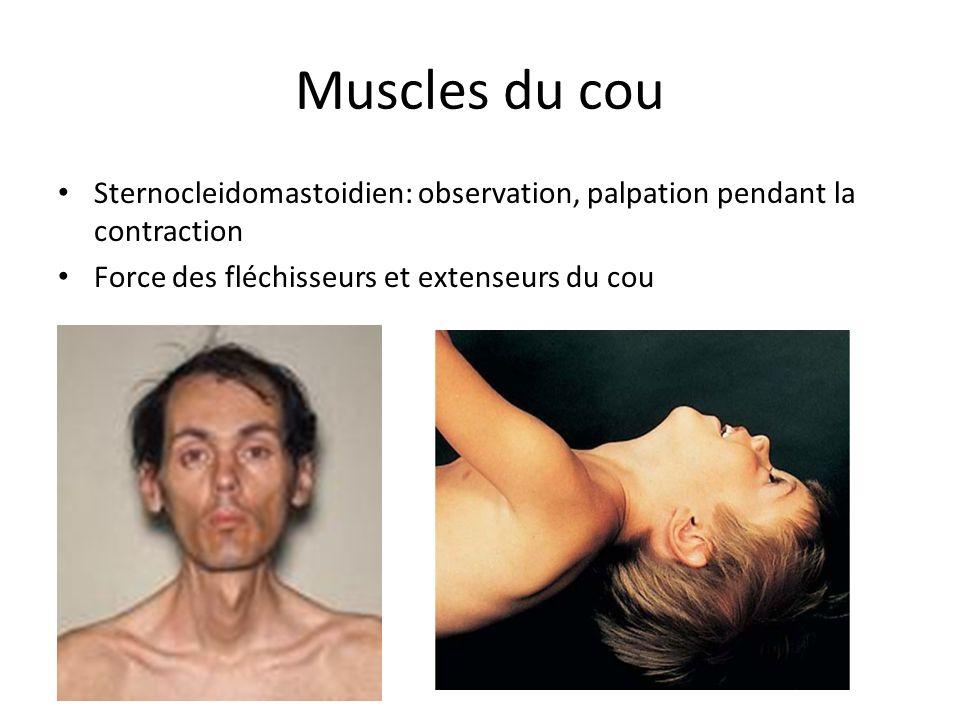 Muscles du cou Sternocleidomastoidien: observation, palpation pendant la contraction.