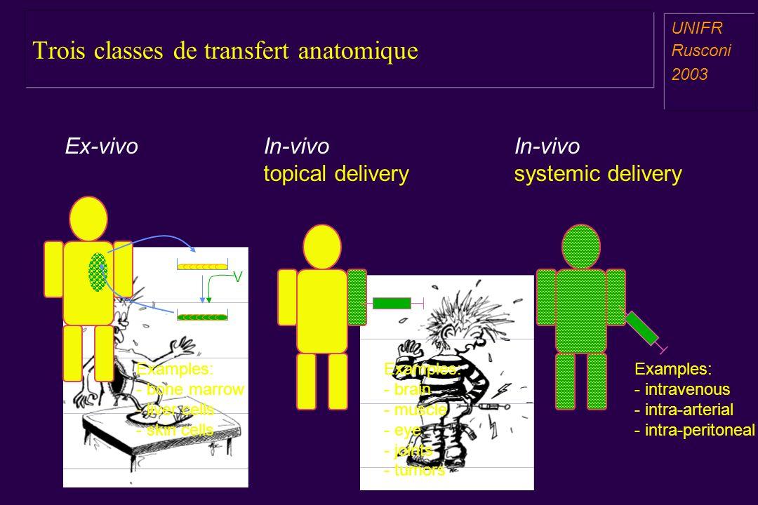 Trois classes de transfert anatomique