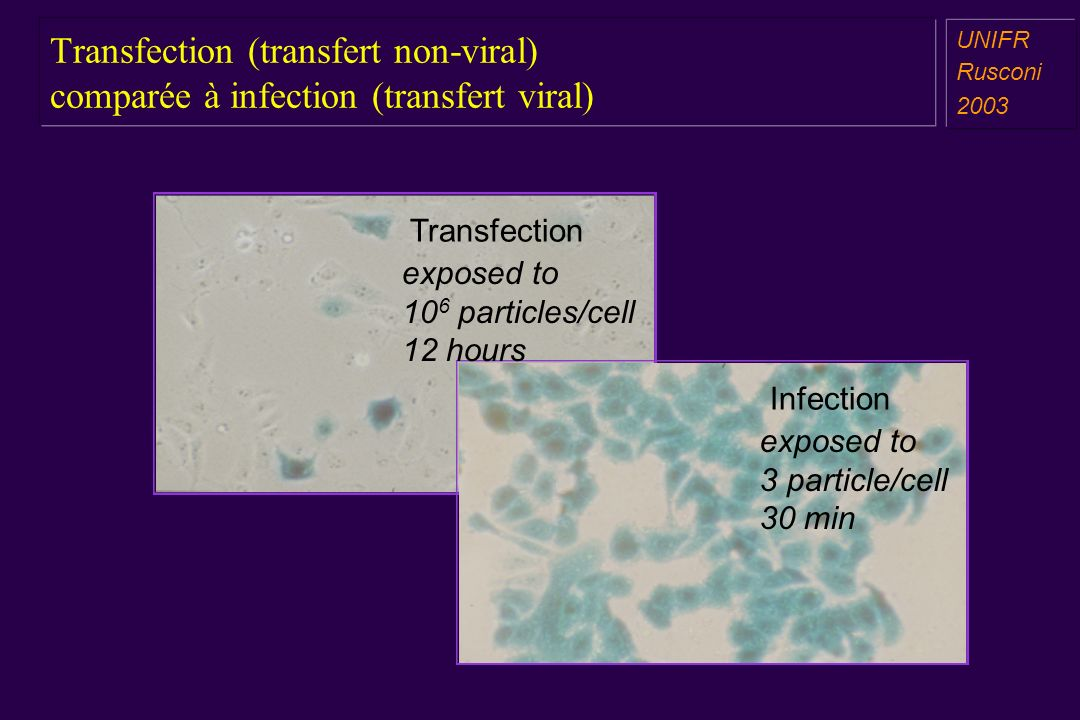 Transfection (transfert non-viral) comparée à infection (transfert viral)