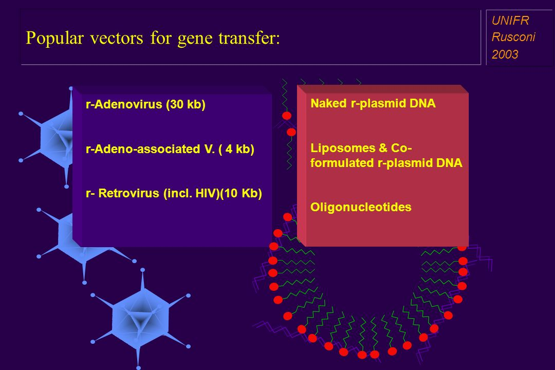 Popular vectors for gene transfer: