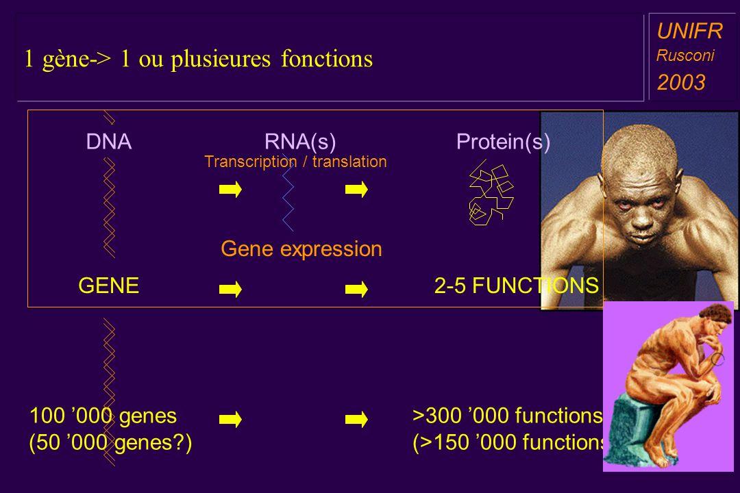 1 gène-> 1 ou plusieures fonctions