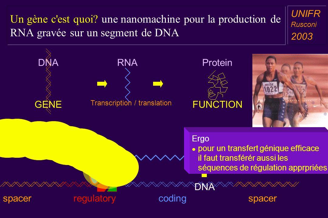 Un gène c est quoi une nanomachine pour la production de RNA gravée sur un segment de DNA