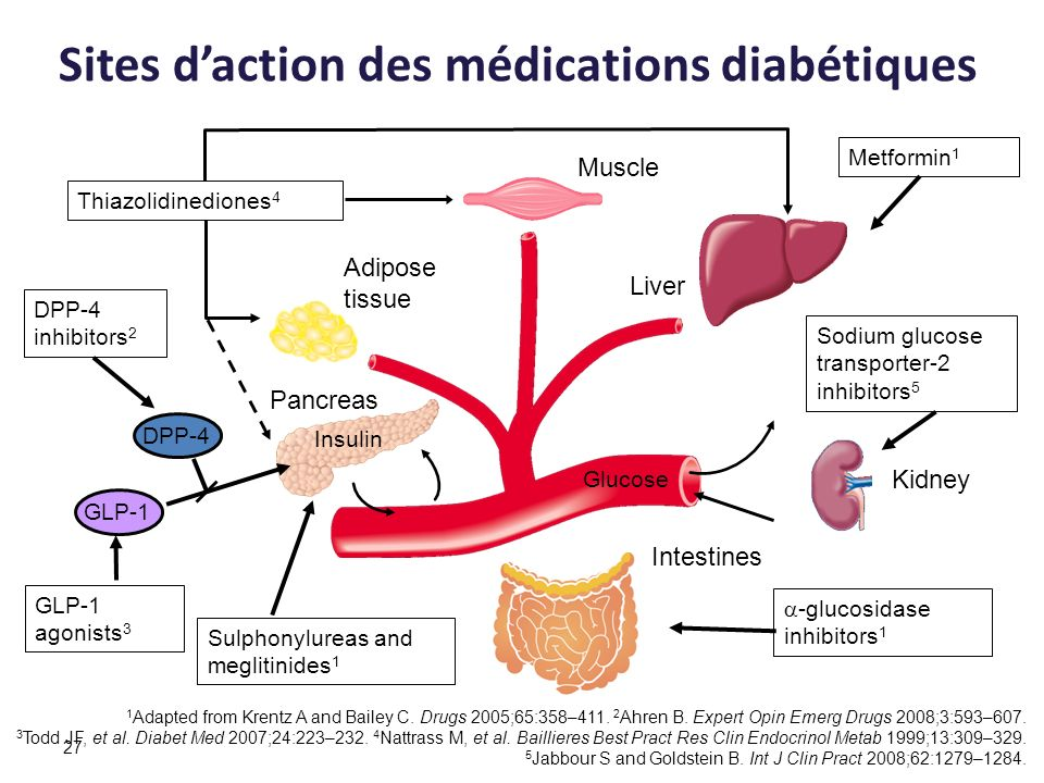 Sites d'action des médications diabétiques
