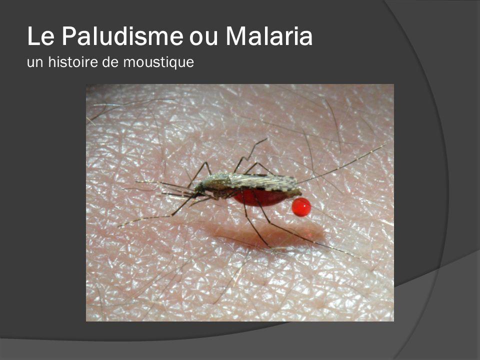 Le Paludisme ou Malaria un histoire de moustique