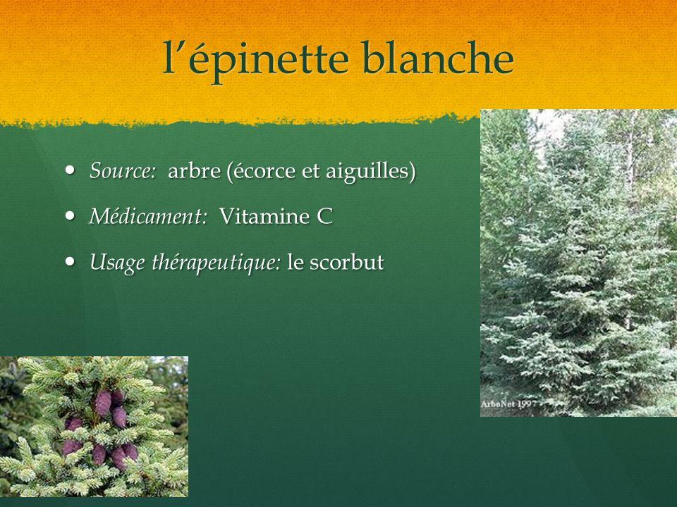 l'épinette blanche Source: arbre (écorce et aiguilles)