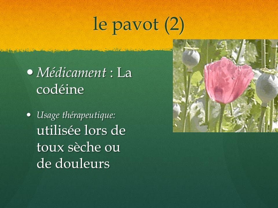 le pavot (2) Médicament : La codéine