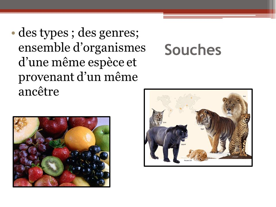 des types ; des genres; ensemble d'organismes d'une même espèce et provenant d'un même ancêtre