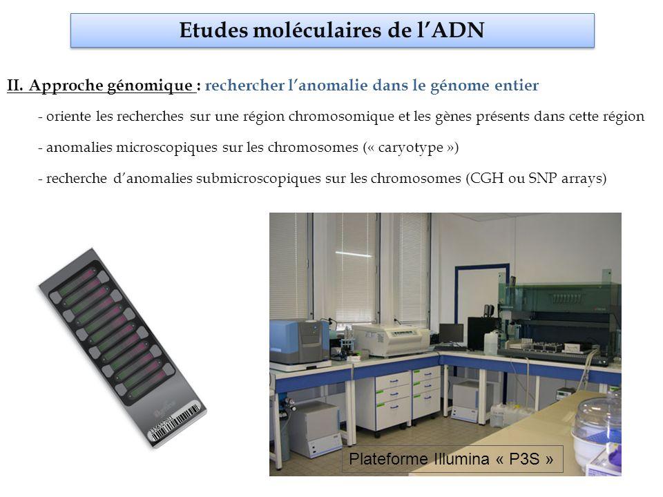 Etudes moléculaires de l'ADN