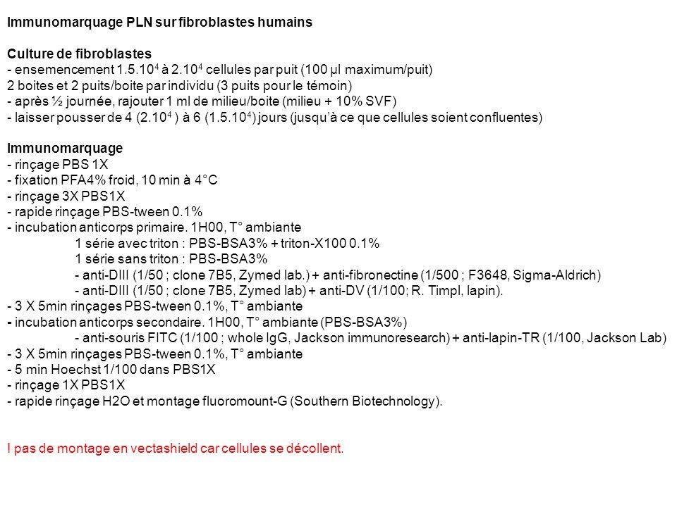 Immunomarquage PLN sur fibroblastes humains