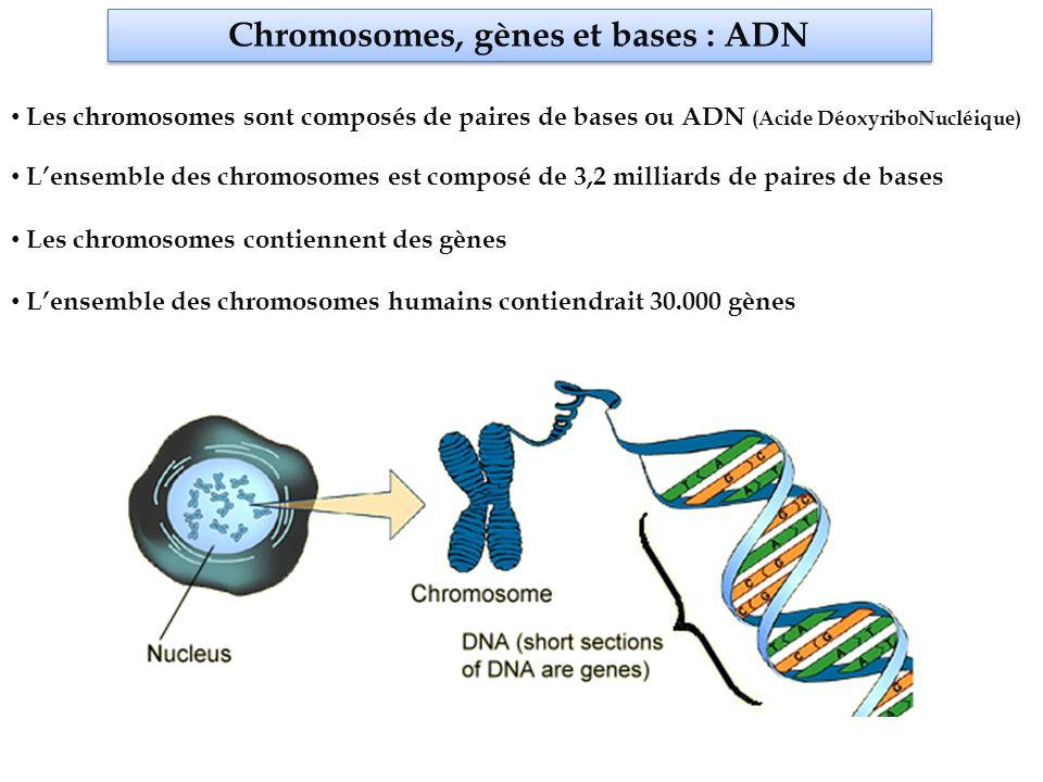 Chromosomes, gènes et bases : ADN