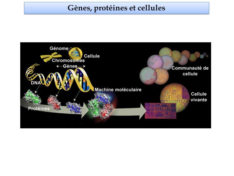 Gènes, protéines et cellules