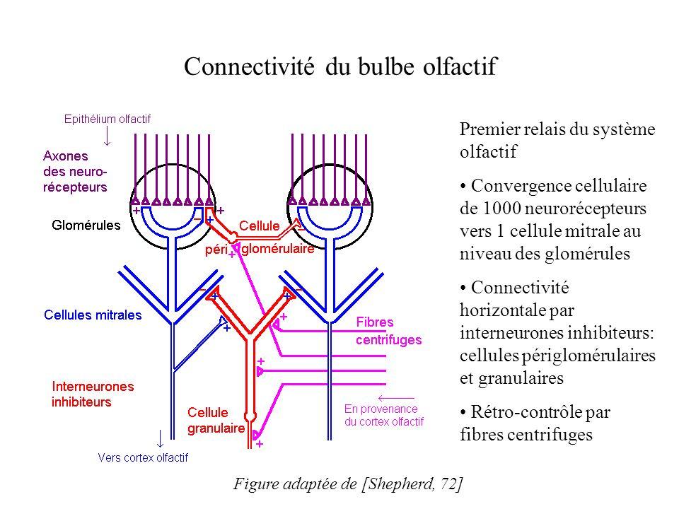 Connectivité du bulbe olfactif
