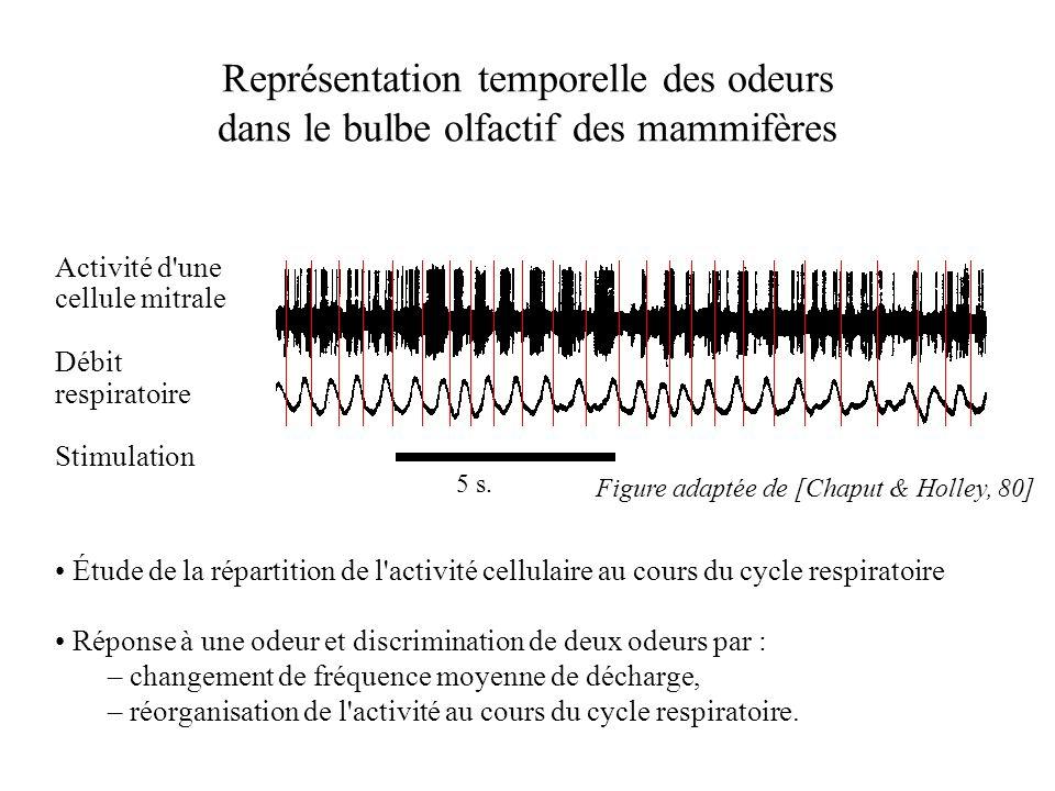 Représentation temporelle des odeurs dans le bulbe olfactif des mammifères