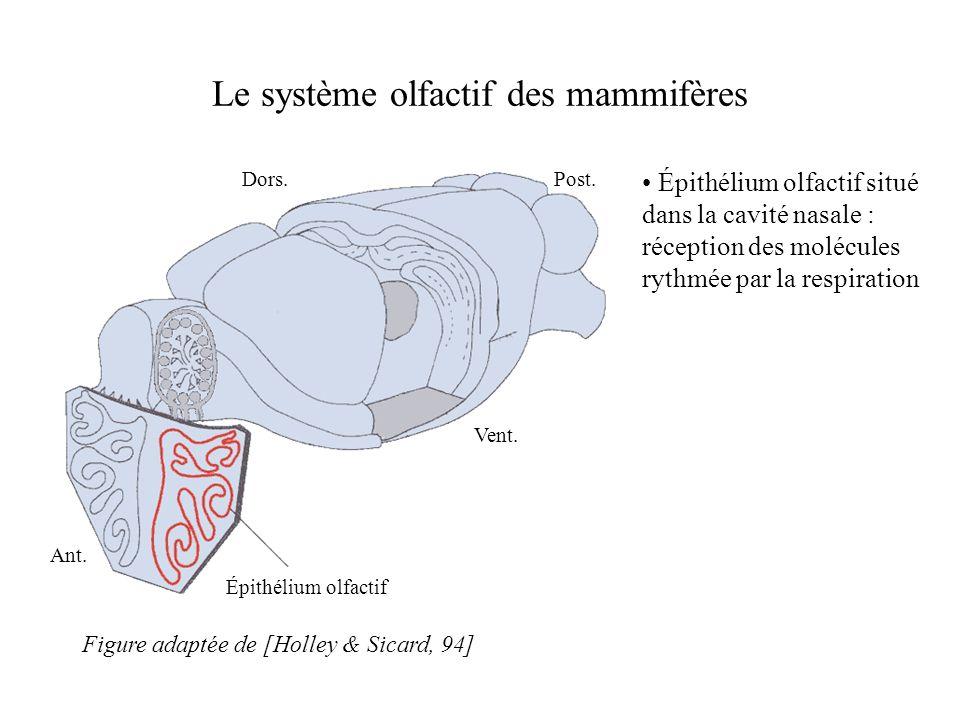 Le système olfactif des mammifères