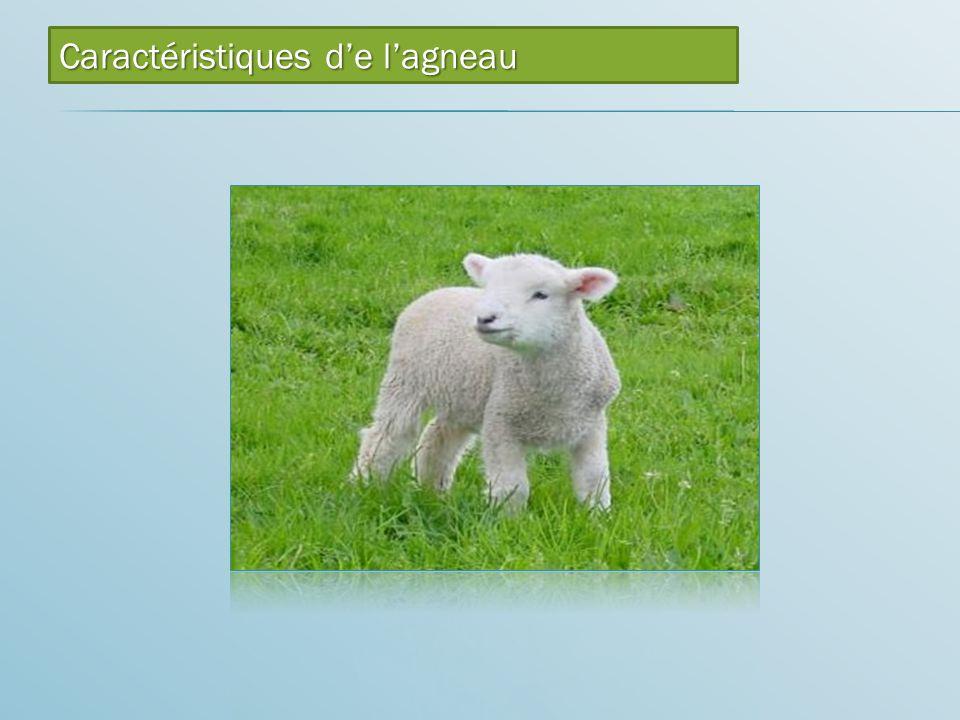 Caractéristiques d'e l'agneau